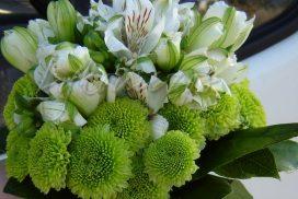 nyfikh me alstromerieschysanthema
